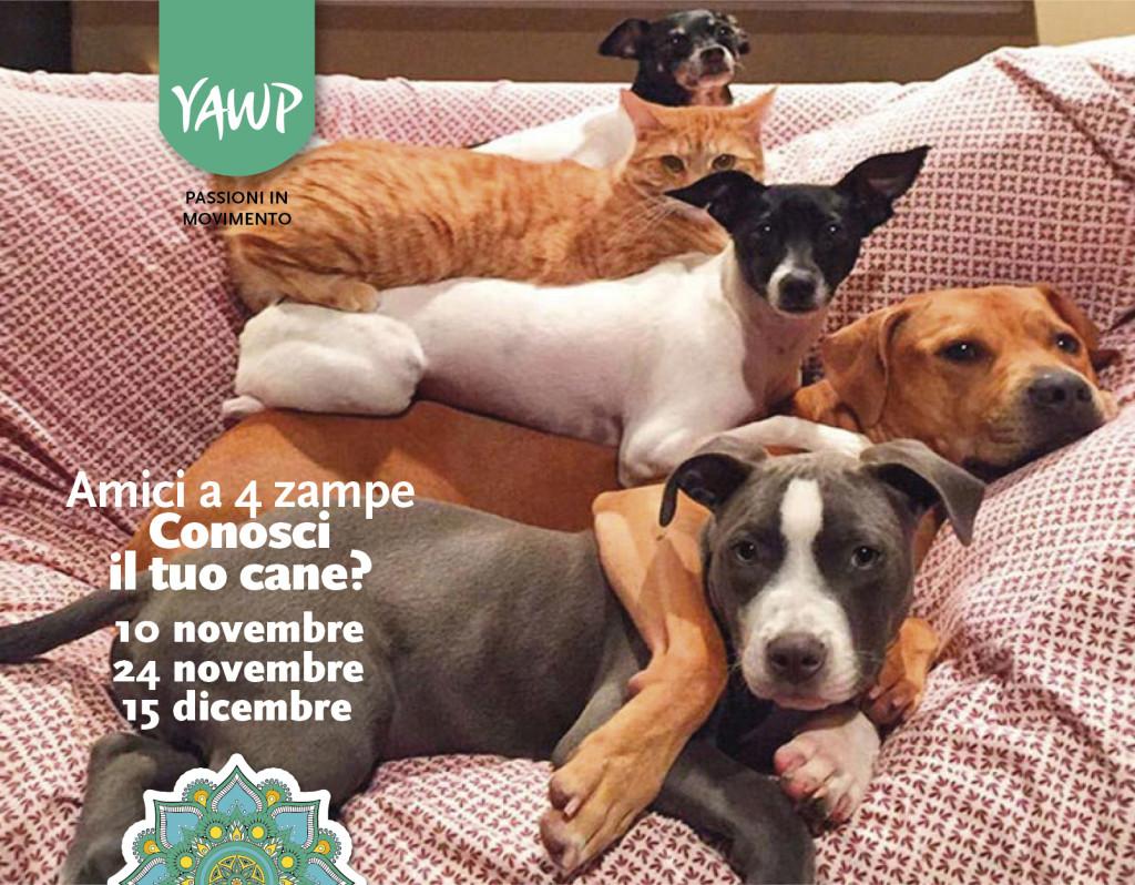 amici animali cane
